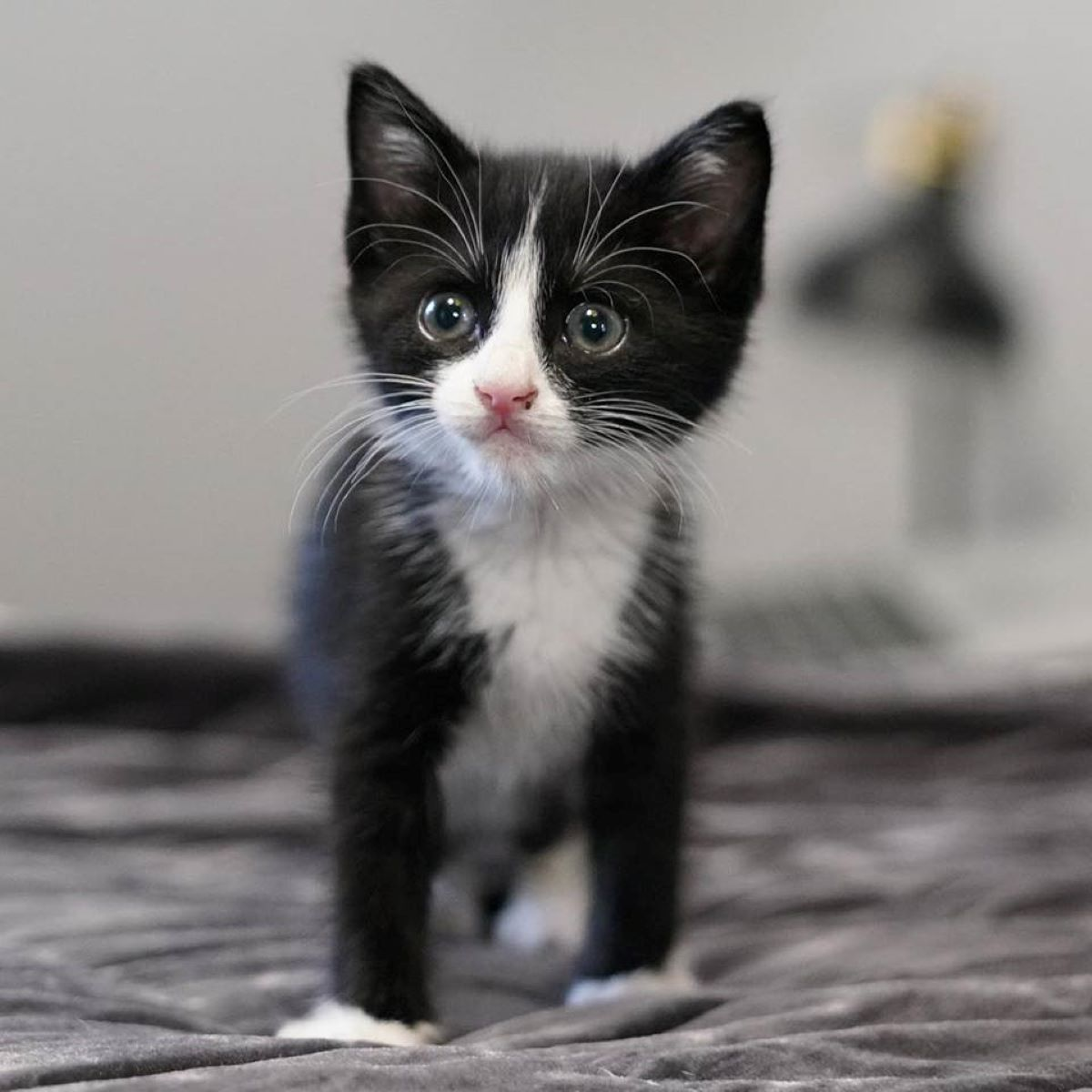 gattino-vispo