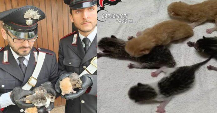 gattini-lanciati-dal-fosso-in-busta-di-nylon-17enne-denunciato