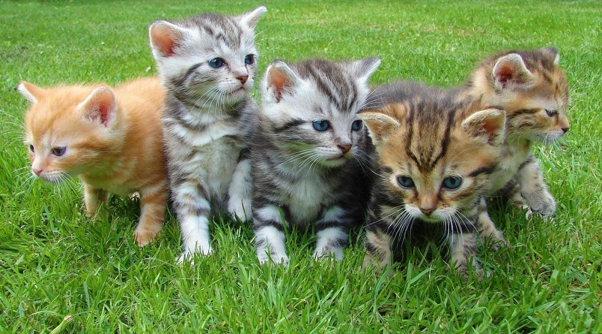 cinque gattini sull'erba
