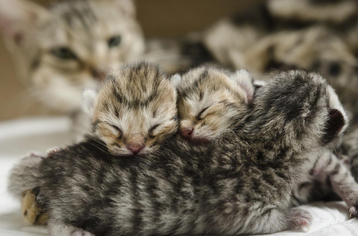 tre gattini con madre sullo sfondo