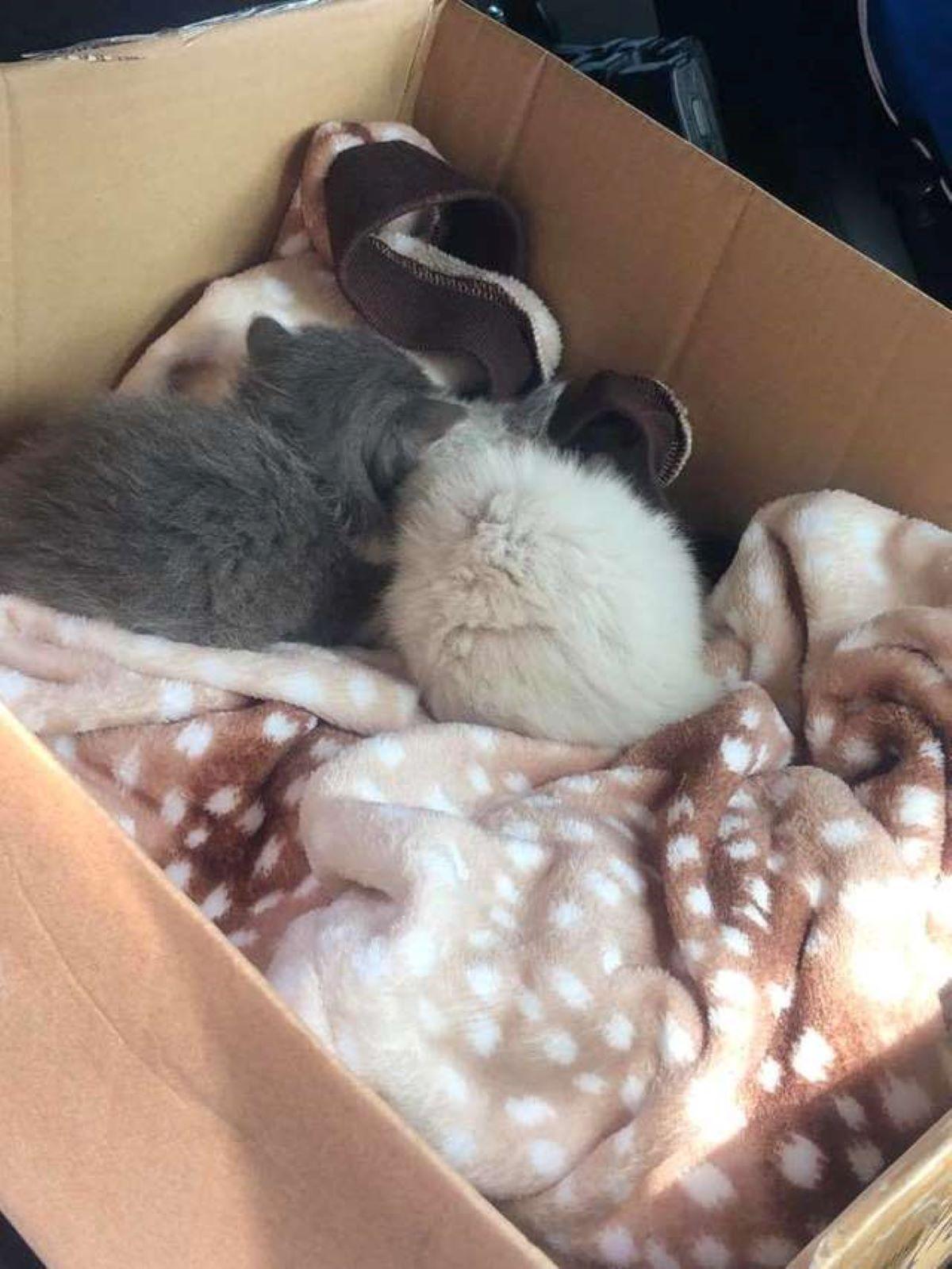 gattini-dentro-a-scatolone-di-spalle