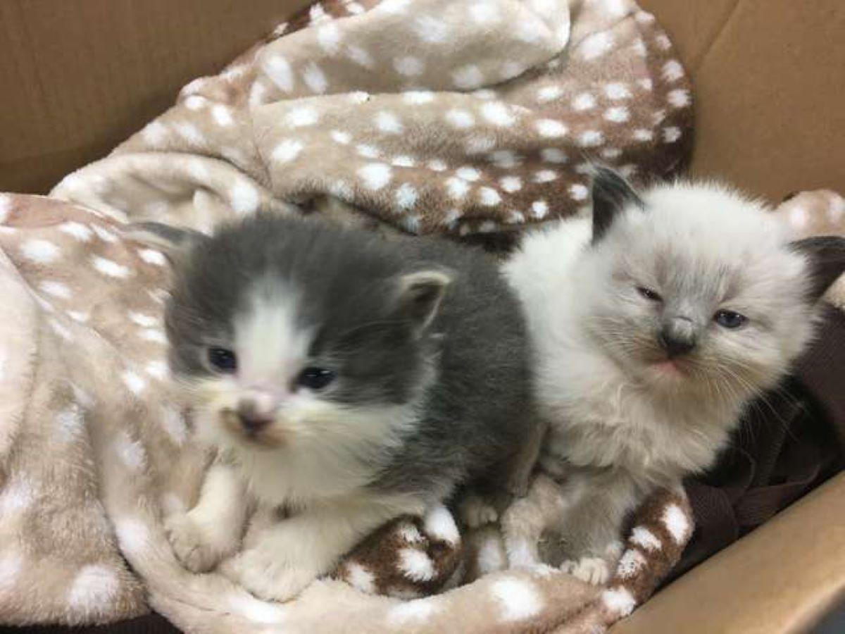 gattini-con-coperta