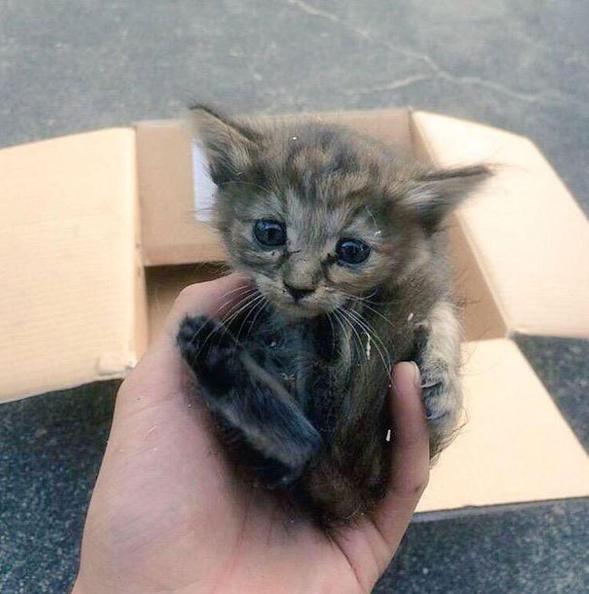 gatto-piccolo-abbandonato