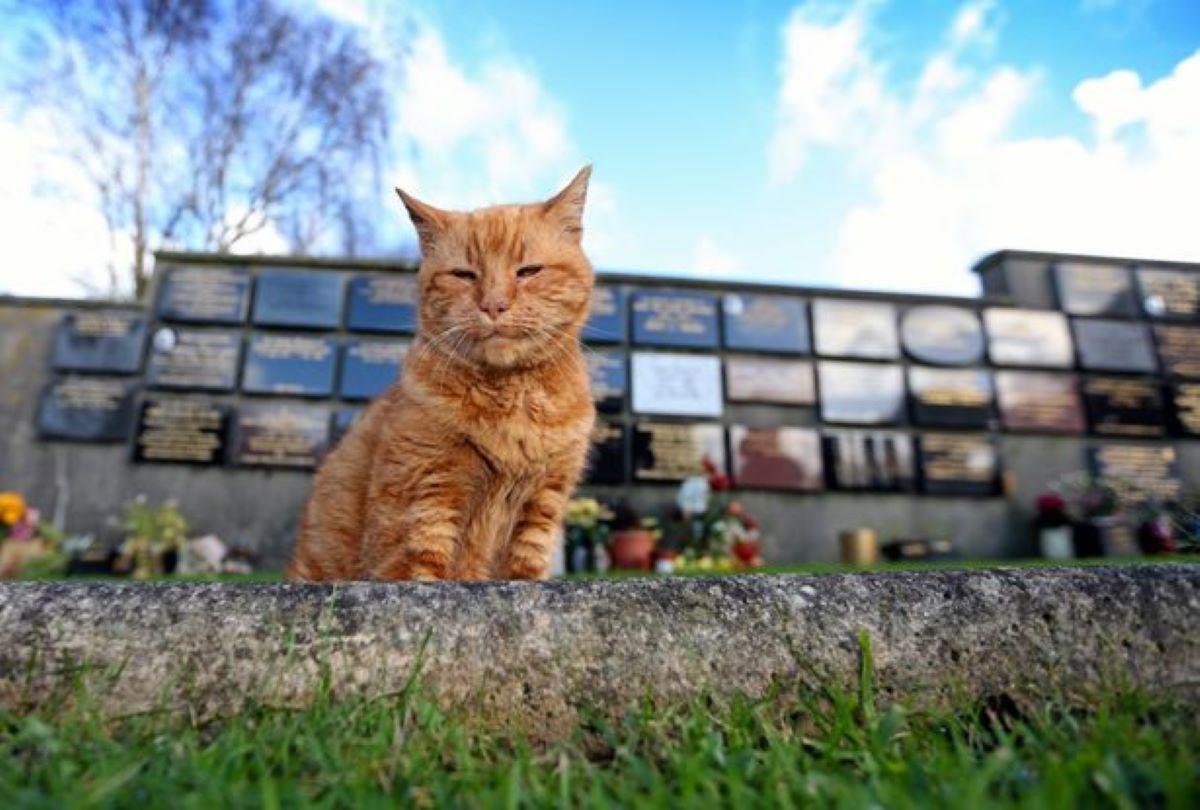 gatto-rosso-in-un-cimitero