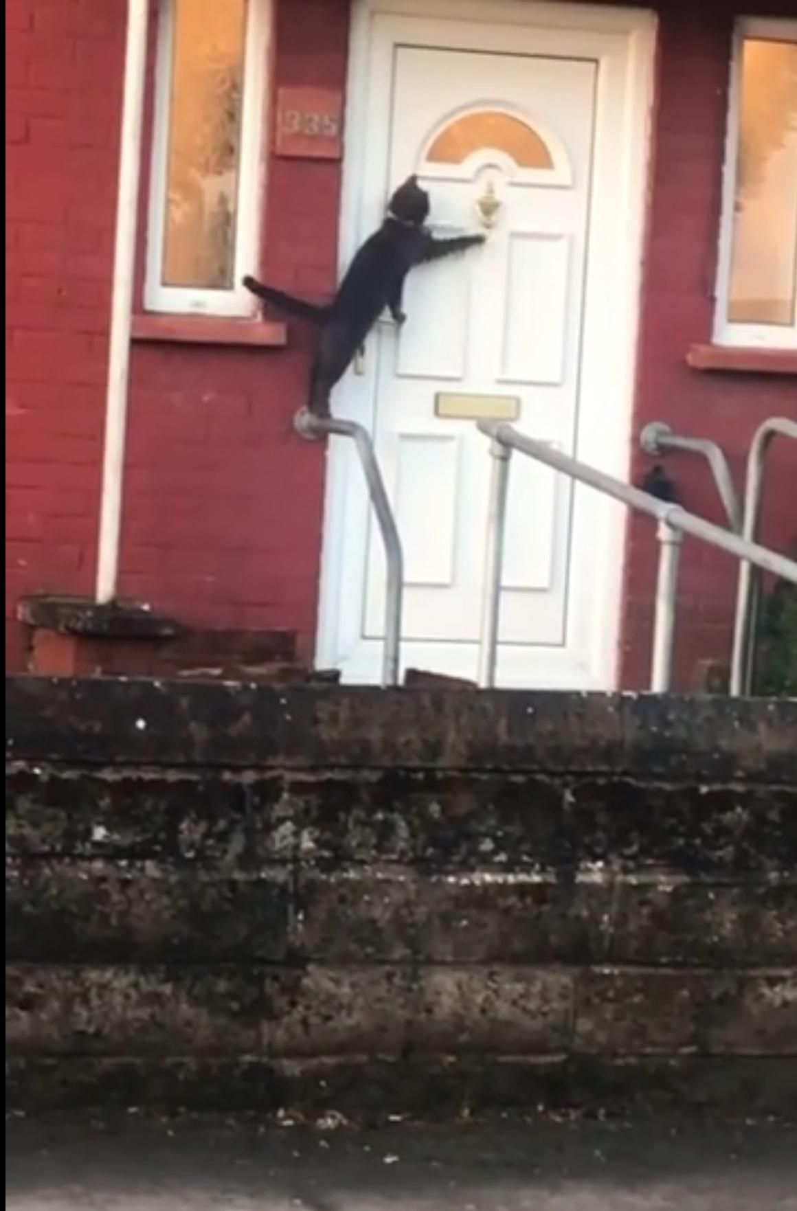 gatto-davanti-a-porta-bianca