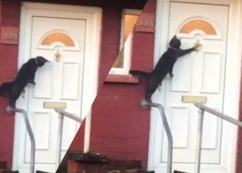 gatto-bussa-alla-porta-per-entrare-in-casa