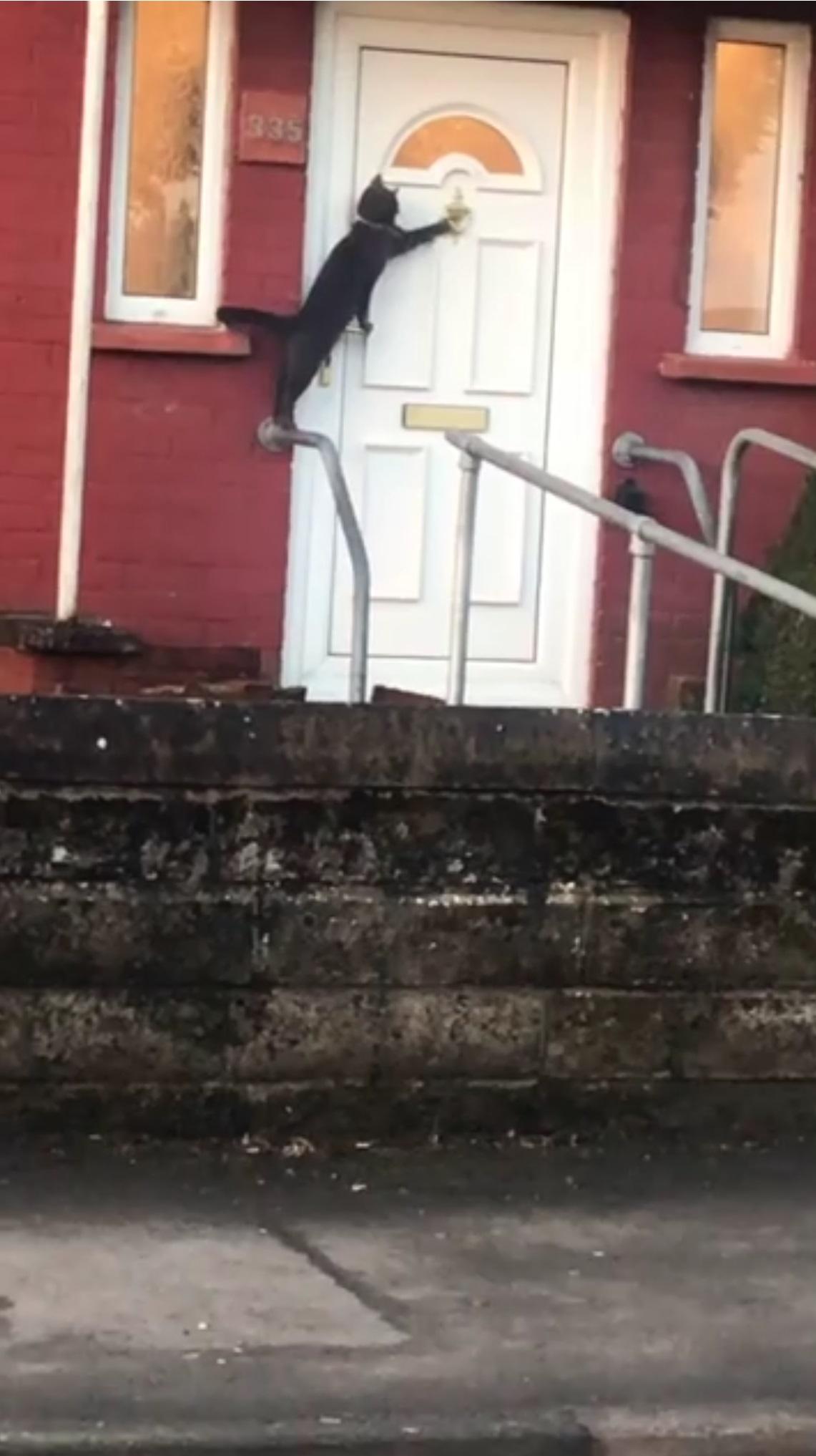 gatto-che-bussa-alla-porta