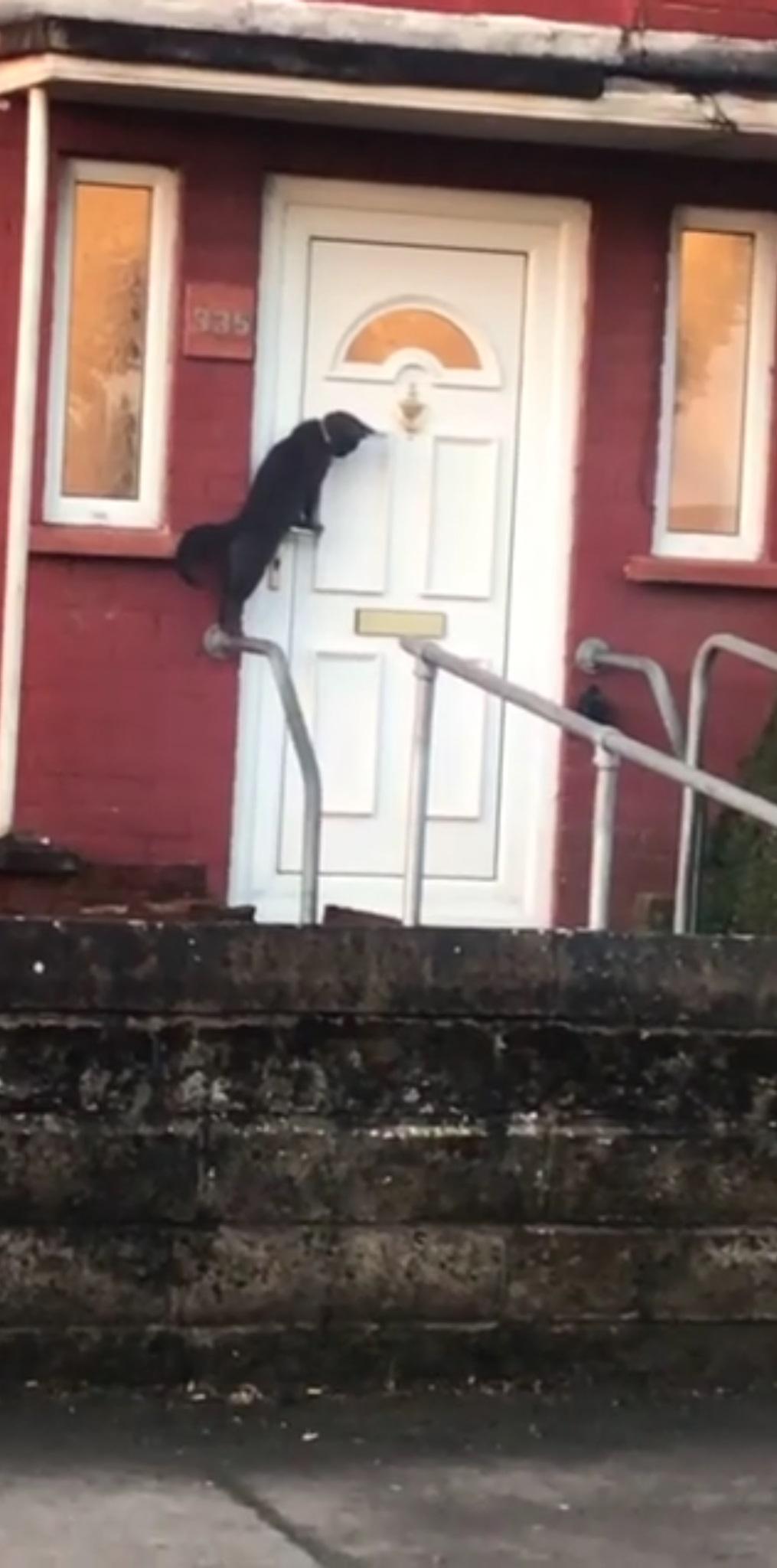 gatto-davanti-alla-porta