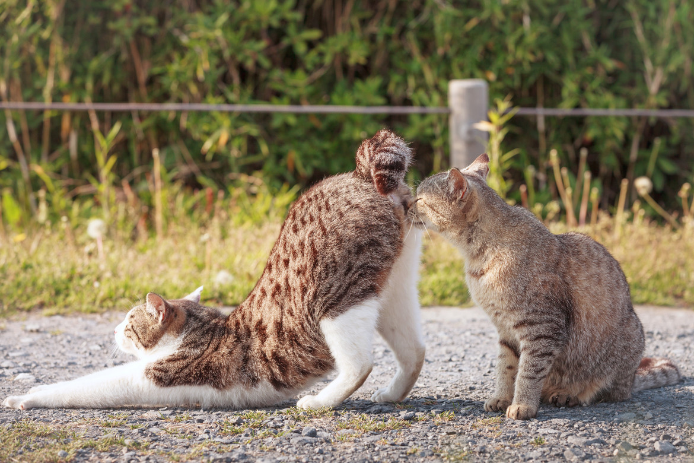 gatti-che-si-annusano