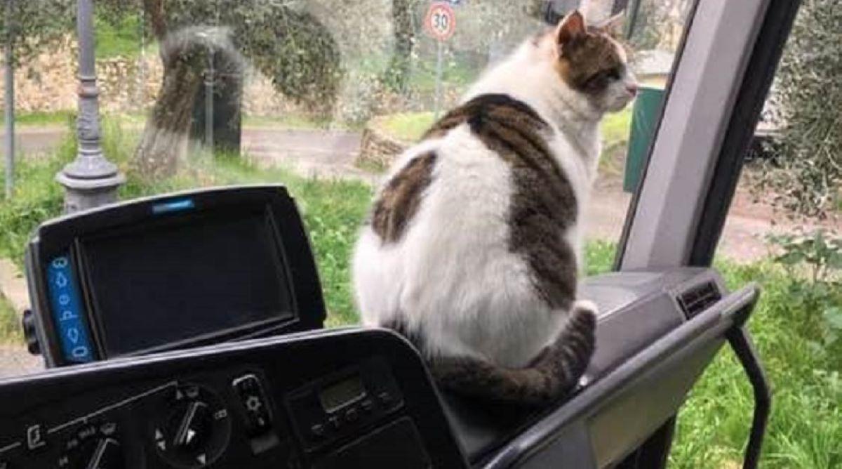 gatto-seduto-su-autobus