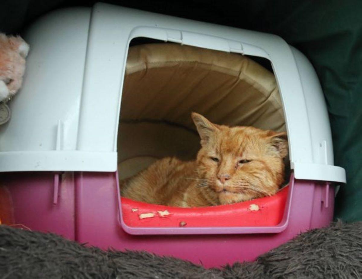 gatto-dentro-a-trasportino