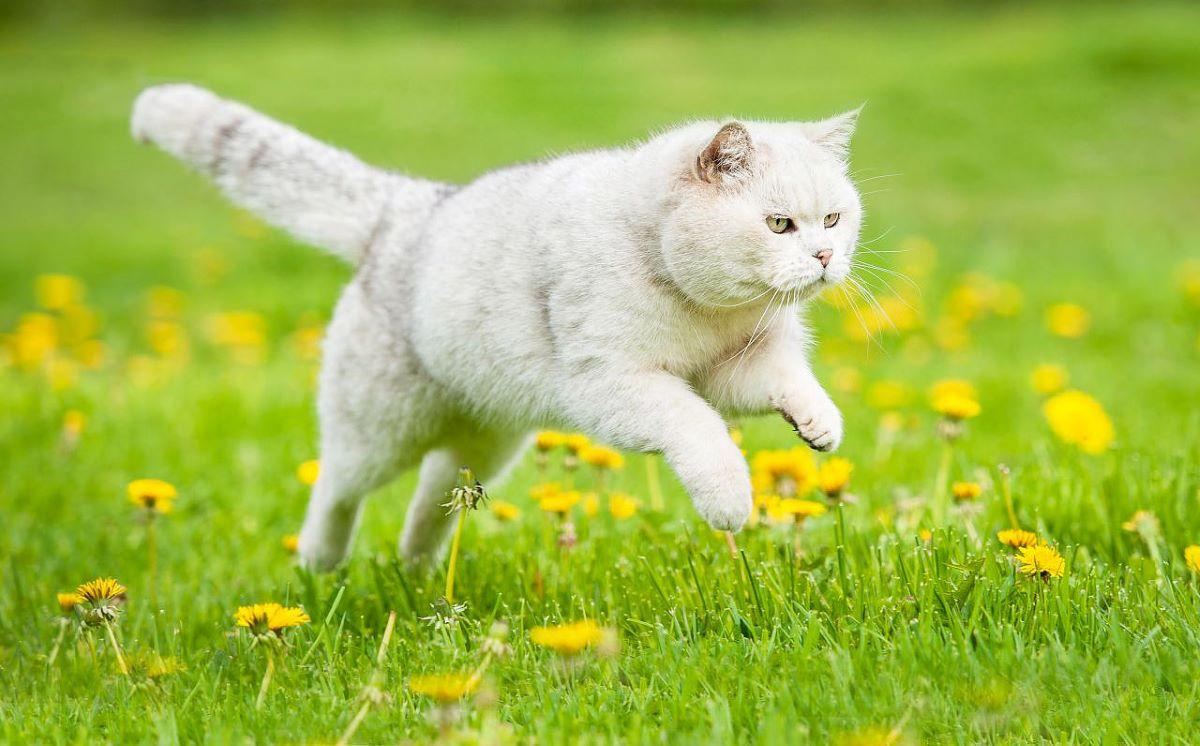 gatto-in-un-prato