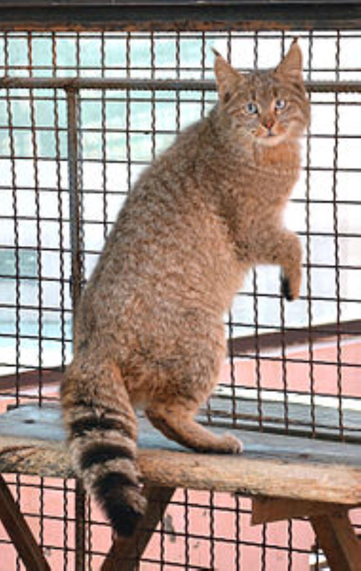 gatto-nella-gabbia