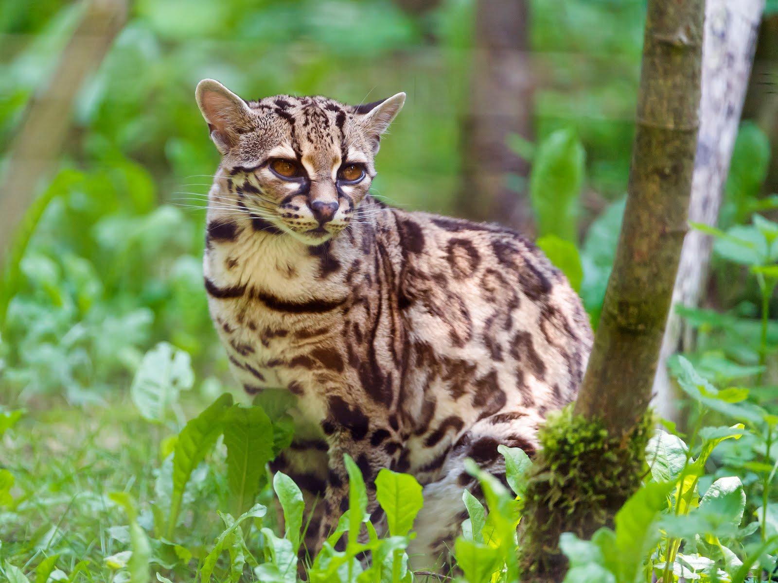 gatto-tra-alberi