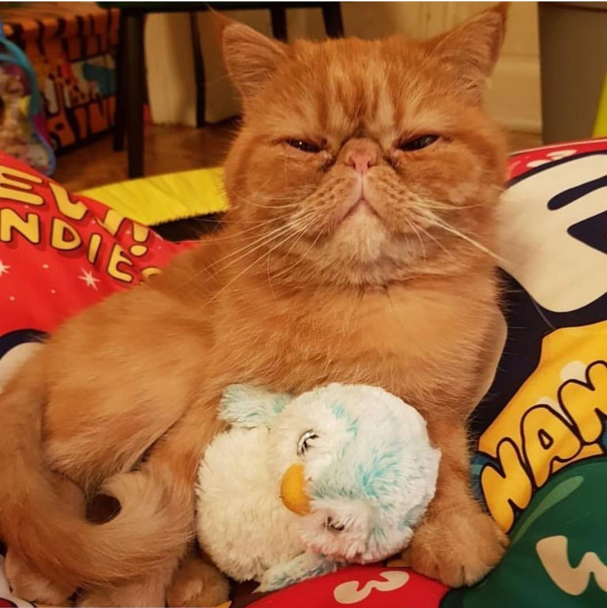gatto con il suo giocattolo