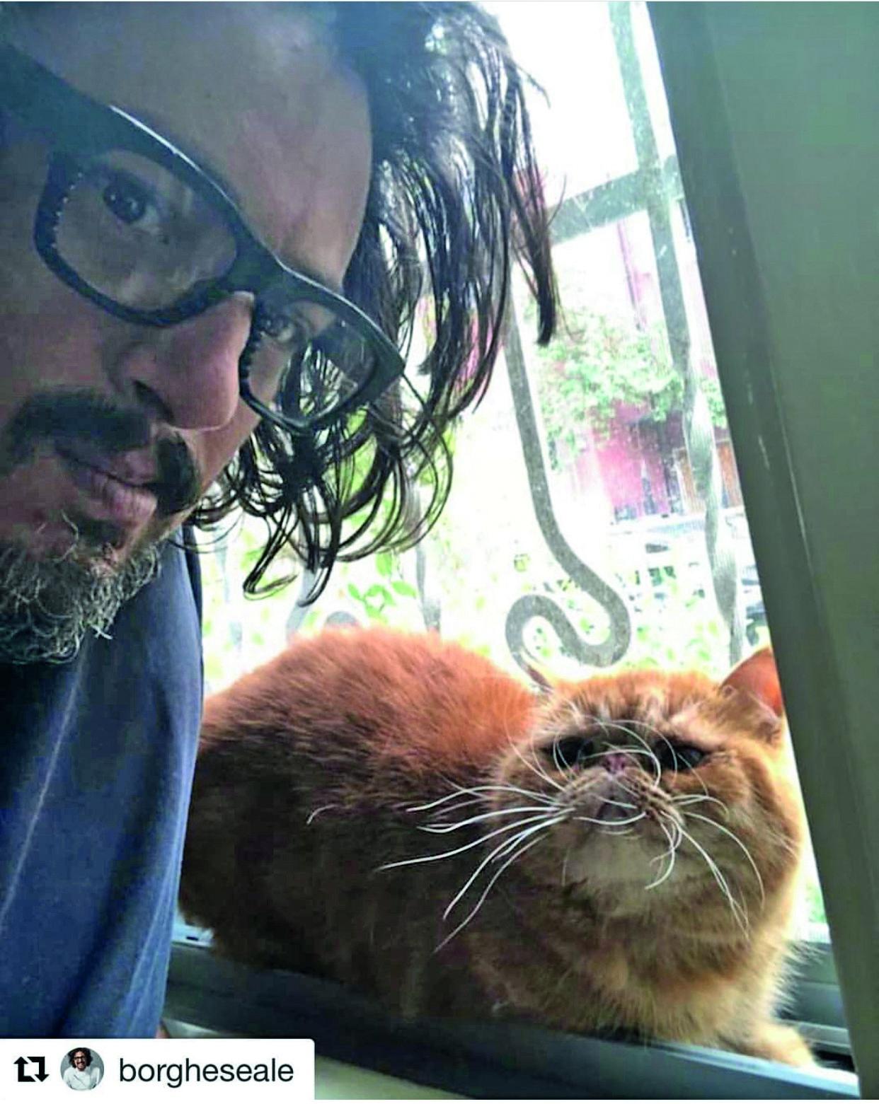 gatto uguale al padrone
