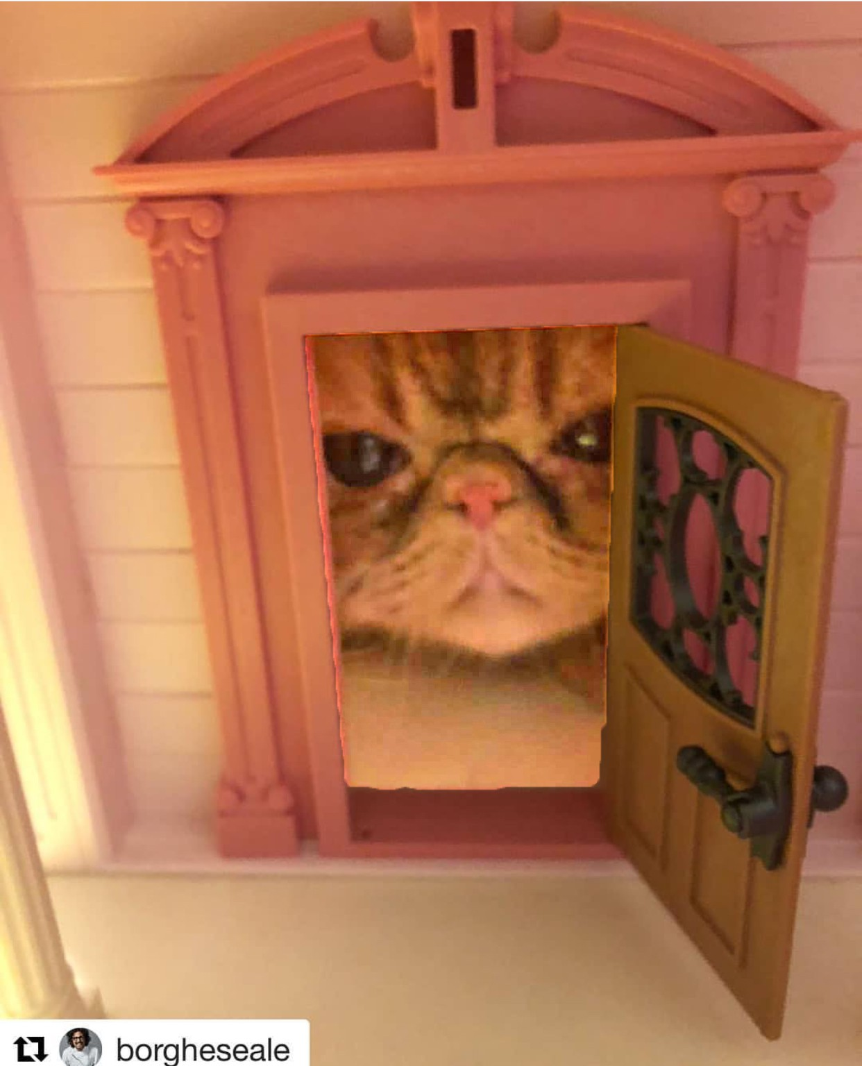 gatto nella casa delle bambole