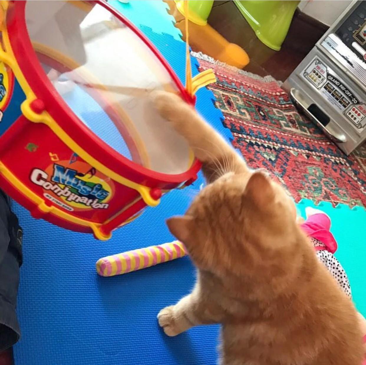 gatto suona il tamburo