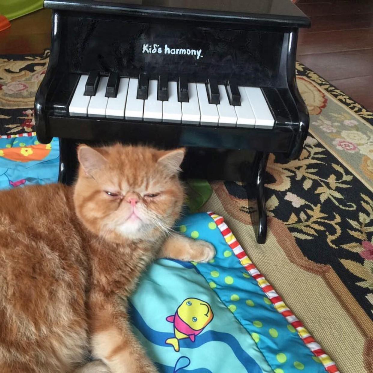 gatto e pianoforte