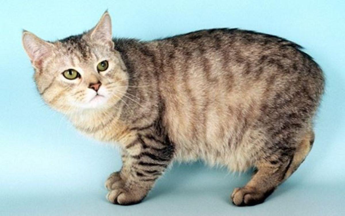 gatto-di-man-che-guarda