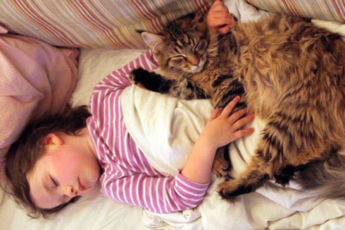 gatta-accoccolata-su-bambina