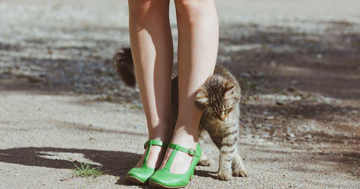 gatto-che-si-struscia-su-donna