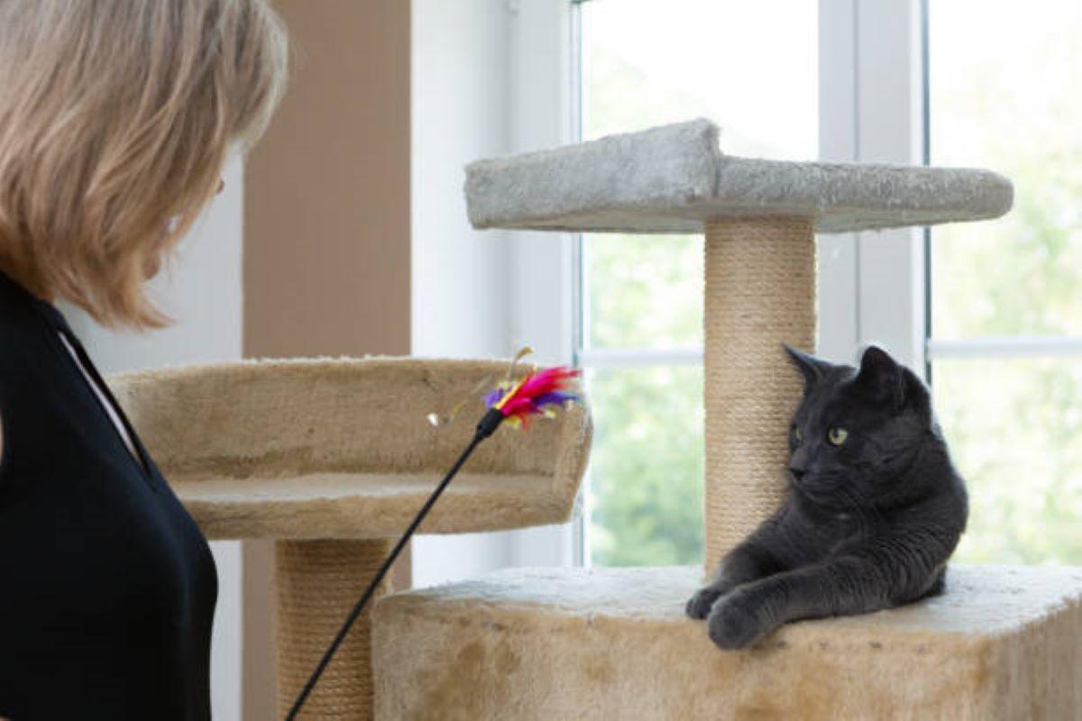 gatto-sul-tiragraffi