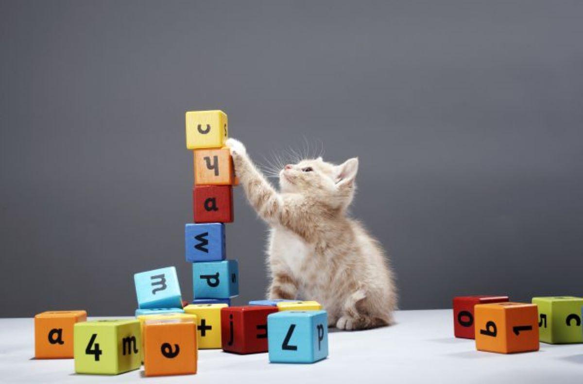 gatto-con-mattoncini
