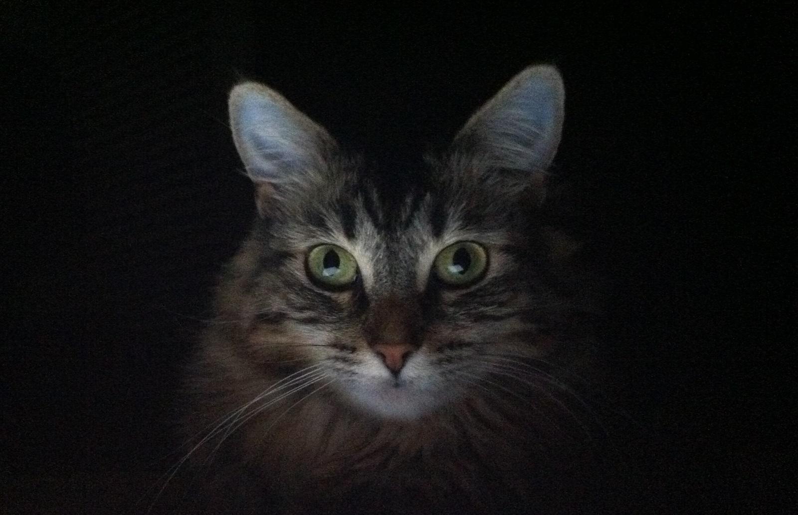 gatto-vede-i-fantasmi