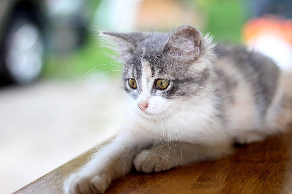 artista-salva-gattina