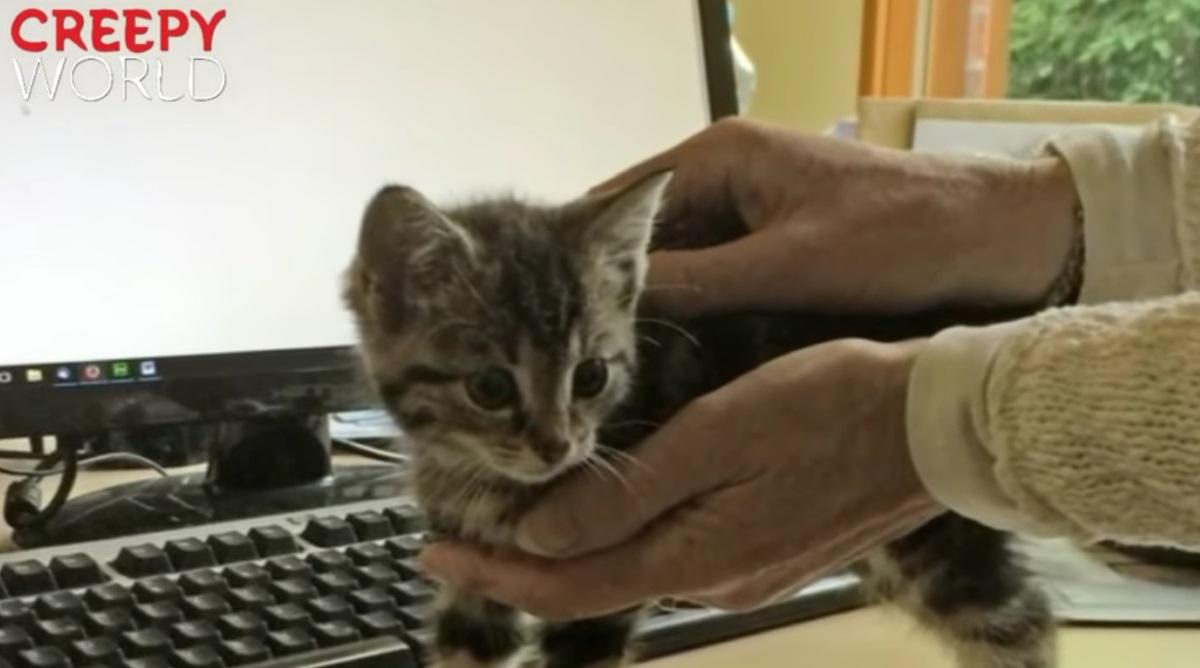 gattino-tra-le-braccia