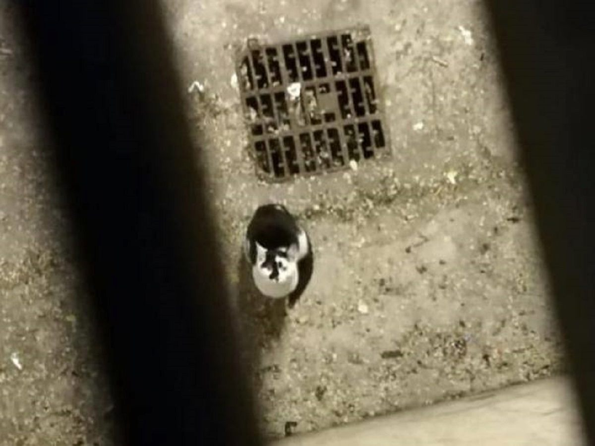 gatto intrappolato a torino