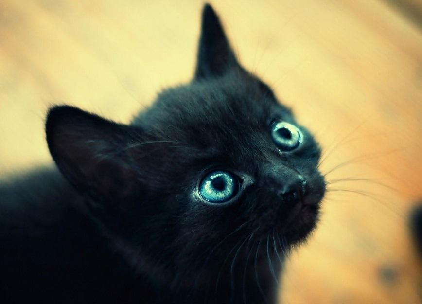 gatto-nero-cucciolo