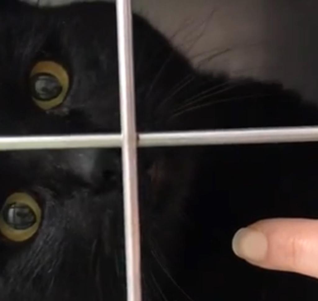gatto-nero-in-gabbia