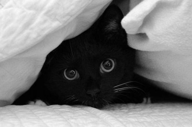gatto nero si nasconde