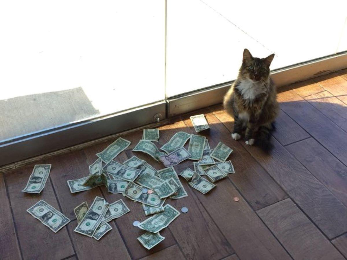gatto-con-una-montagna-di-dollari