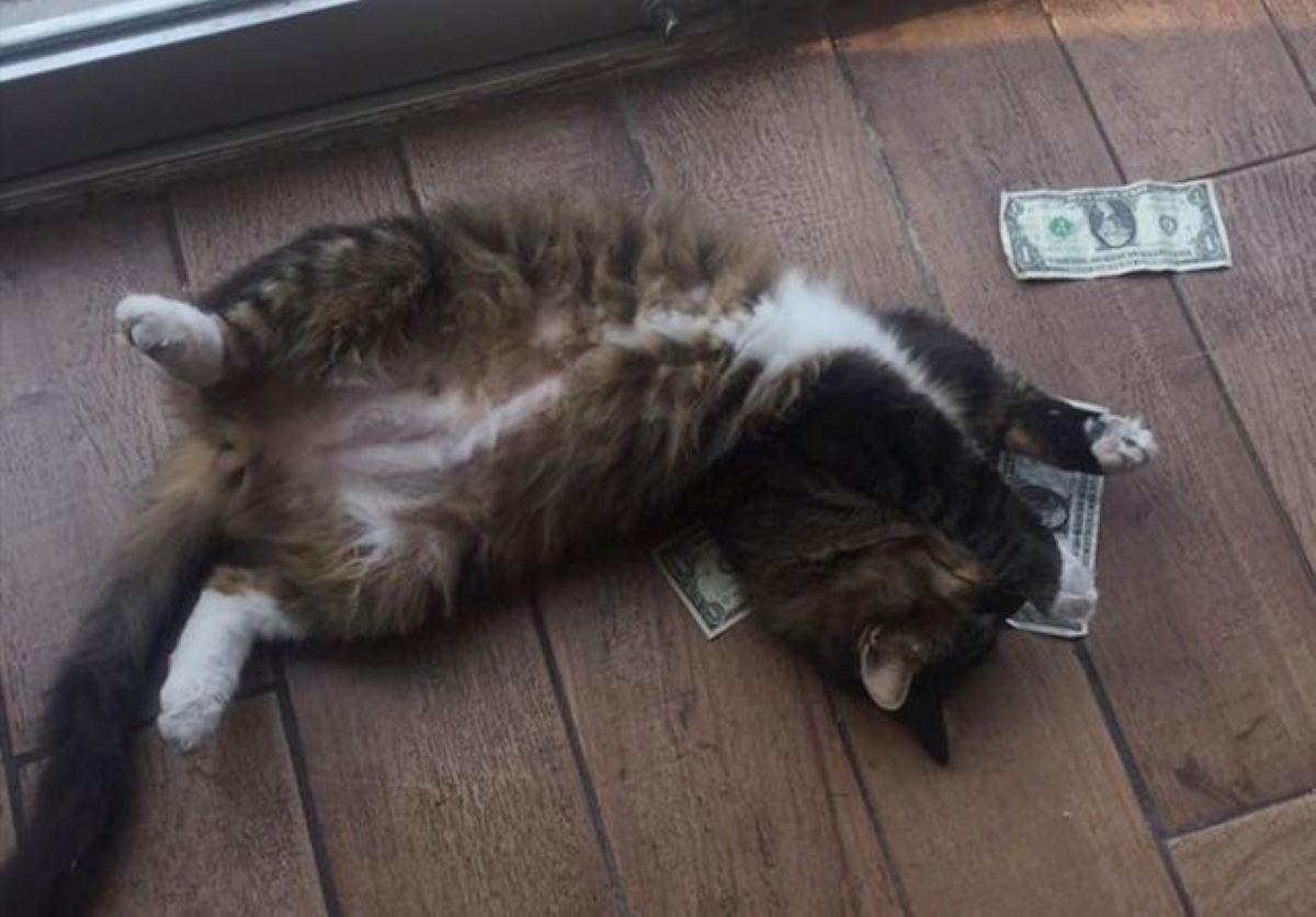 gatto-sopra-a-banconote