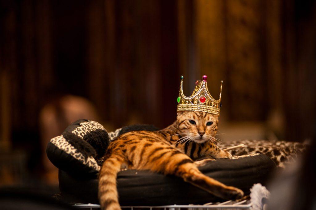 gatto-padrone-del-mondo