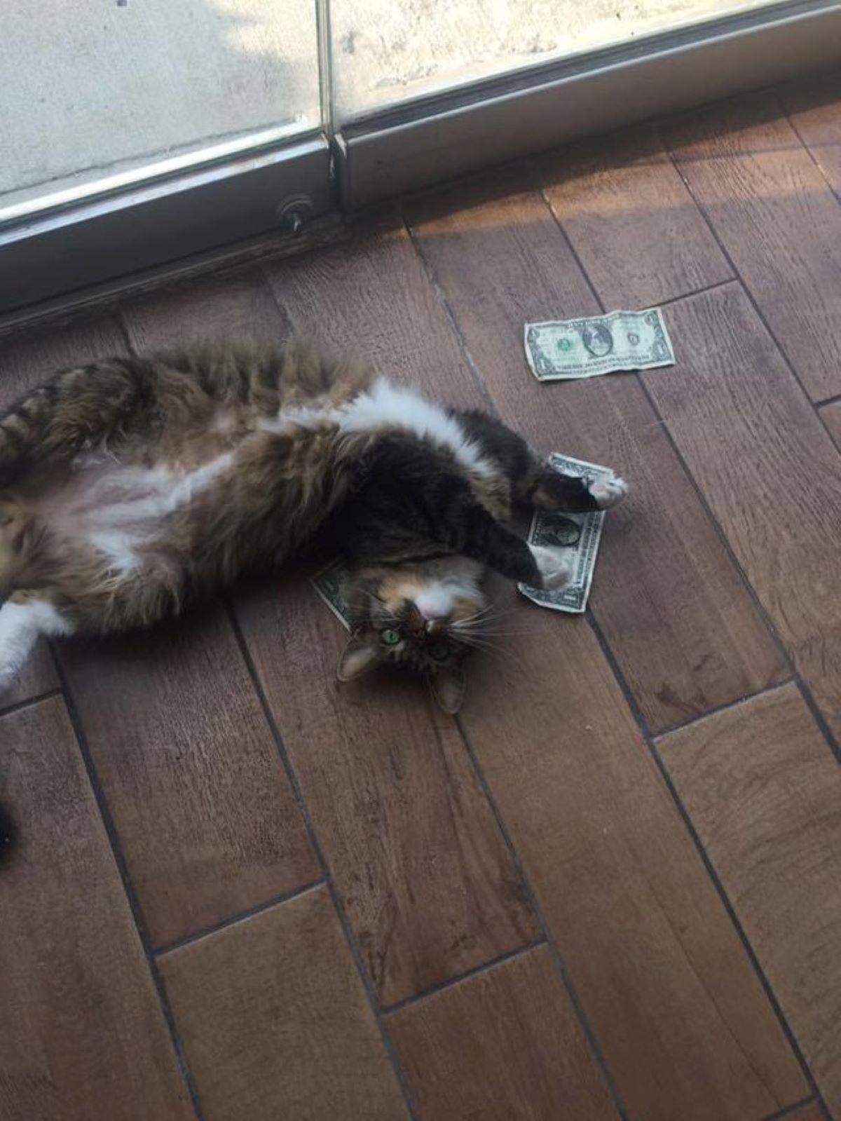 gatto-che-si-rotola-con-banconote