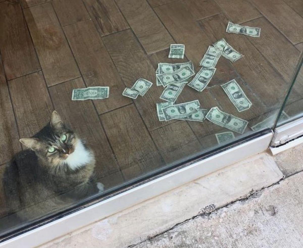 gatto-con-banconote-dietro-porta-a-vetri