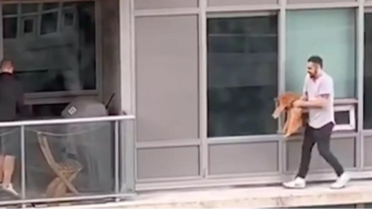 gatto-in-braccio-a-uomo-che-cammina-su-cornicione