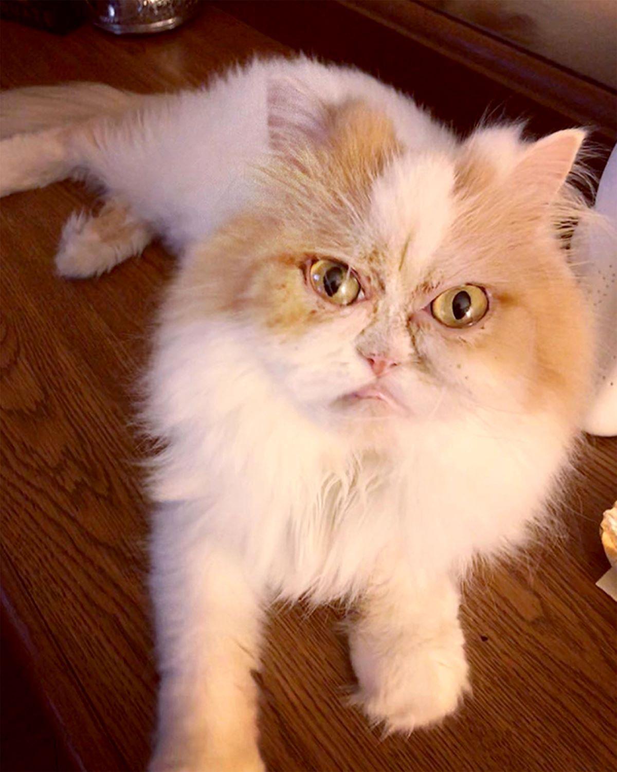 gatto-con-sguardo-imbronciato