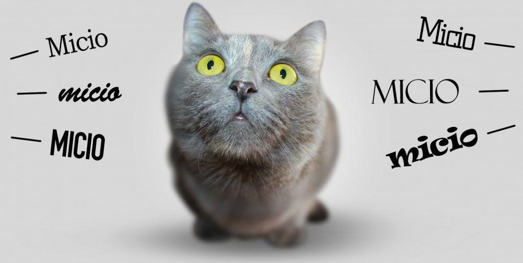 gatto-che-viene-chiamato