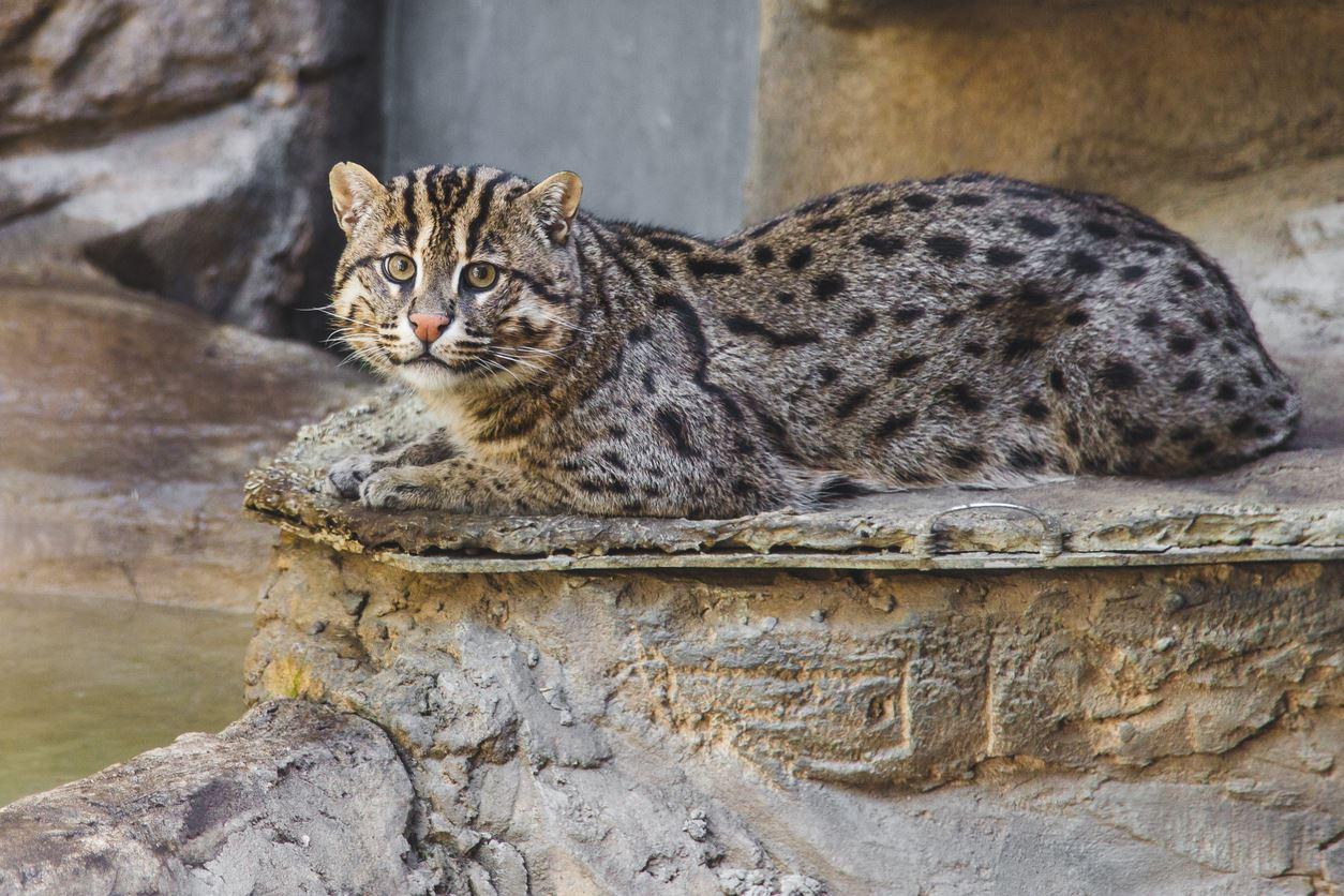 gatto-su-fiume