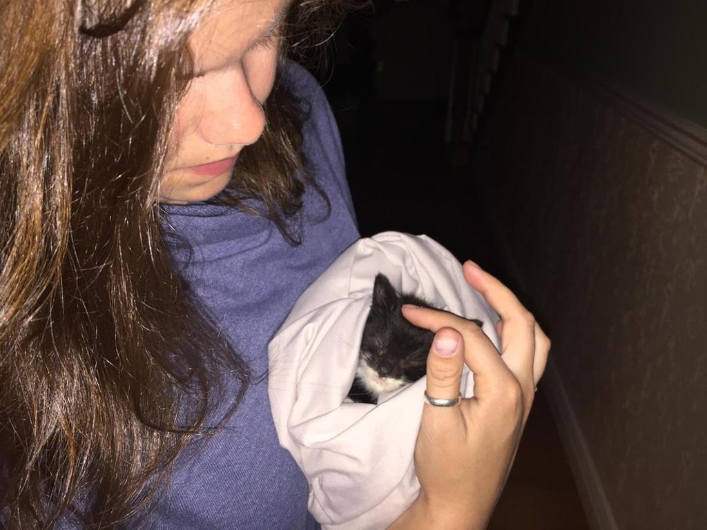 gattino trovato da una ragazza
