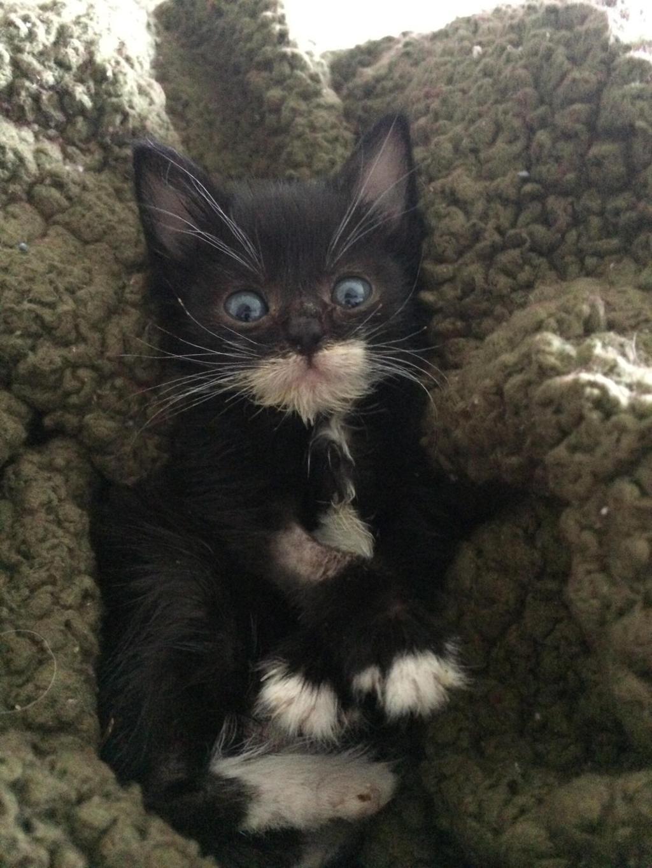 piccolo gatto arzillo