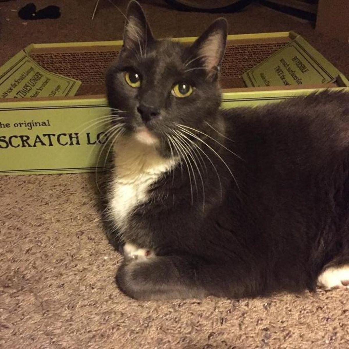 gatto-vicino-a-scatola