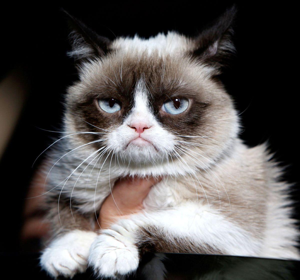 gatto-imbronciato-su-sfondo-nero