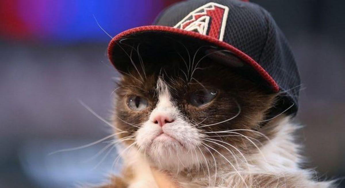 gatto-con-cappello
