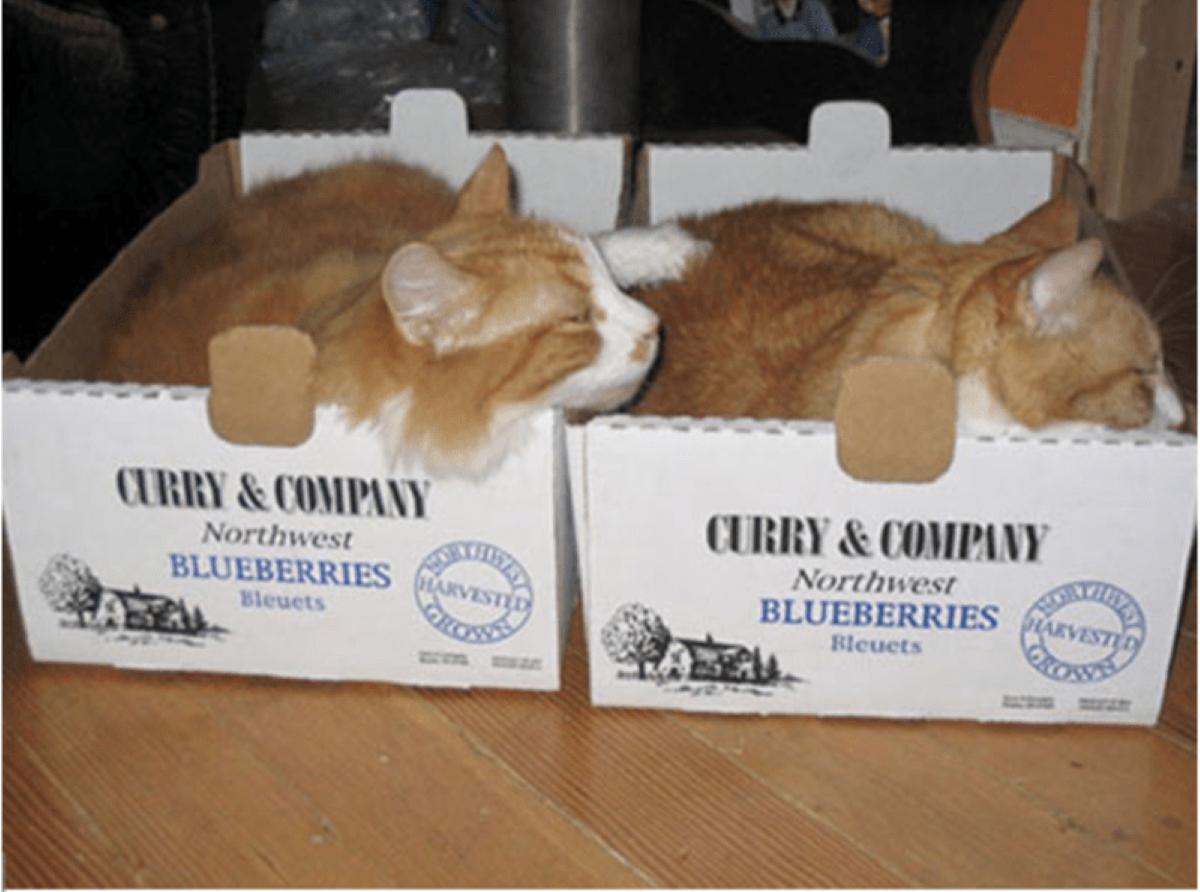 due-gatti-arancioni-nelle-scatole